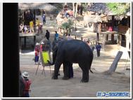 Thai_elephant