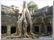 Ta_prohm_temple