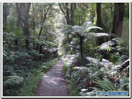 Milford_track