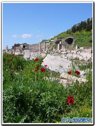 Efesos_poppy