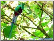 Costarica_quetzal