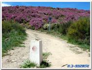 Camino_2