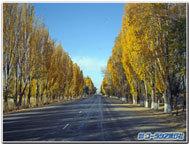 イシククル湖畔の並木道