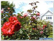 Gardencontest