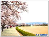 Gyeongju_web