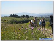 Pilgrimage_flowers_2