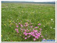 Flowerlake_2