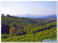 スロヴェニアのぶどう畑