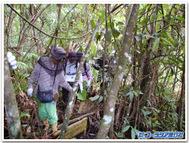 Jungle_walk