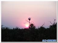 Sunrisepantanalblogtempl_8
