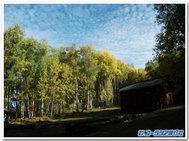 美しい黄葉と青空