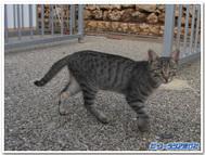 ジュガンディーヤ神殿で会ったネコ