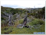 Kareki_patagonia