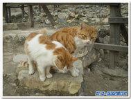キプロスの猫はどこで見ても毛並みがいい