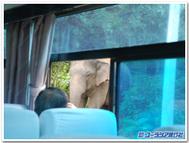 野生の象に遭遇!