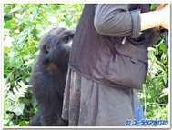 Gorira2