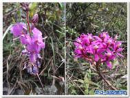 インティプンクへのインカ古道で見かけた蘭