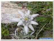 Flowerblogtemplate