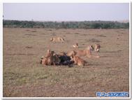 Lionfamilyblogtemplate