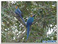 Birdblogtemplate