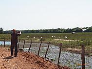 Pantanal_6