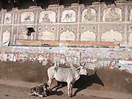 Fatehpur_haveli2