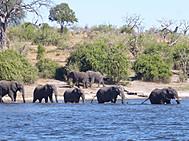 ユーラシア旅行社の南部アフリカツアー、チョべ国立公園