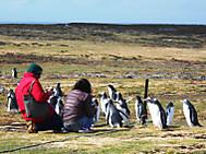フォークランド諸島で出会ったゼンツーペンギン