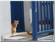 Fukunaga_cat