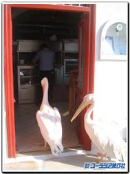 Myconos_pelican