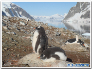 Penguin4_2