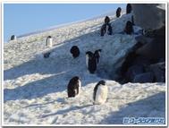 Penguin_return