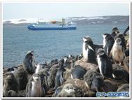 Sp_penguin