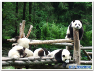 Gaan_panda2