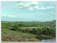Sicilia_fields
