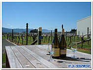 Nz_winery
