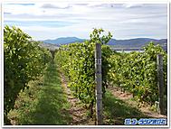Tasmania_winery