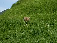 カムチャツカ、クリル渓谷のヒグマ(イメージ)