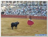 Bullfight1