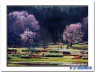 Sakurablogtemplate