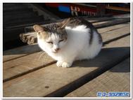 Catblogtemplate