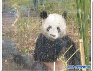 Pandablogtemplate