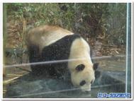 Pandadrinkingwaterblogt