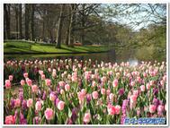 Flowerwithlake2blogtemp_2