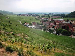 ユーラシア旅行社のフランスワイン街道ツアー、新緑のアルザスワイン街道にて