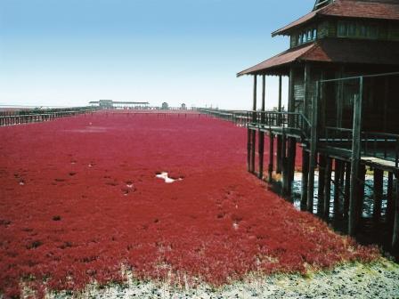 紅海灘ツアー、紅海灘旅行