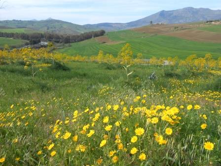 シチリアの田園風景