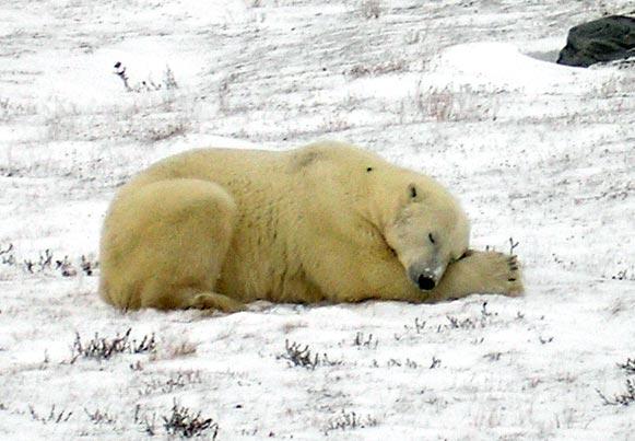 Polarbear0611027jpg_2