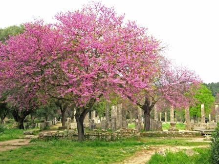 オリンピア (ギリシャ)の画像 p1_35