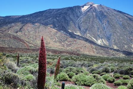 テイデ山とエキウムの花